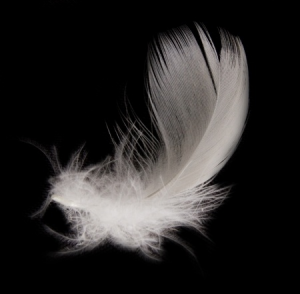 Archangel Michaels White Feather - ZARA