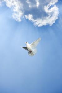 Soul's Yearning - Angel Readings by ZARA