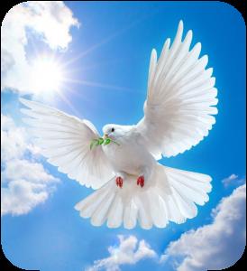PeaceAnddLove-AngelReadingsByZARA