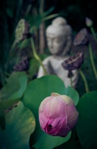 BuddhasWisdom-AngelReadingsByZARA